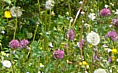Wildflowers at Poey de Lascar aire, A64