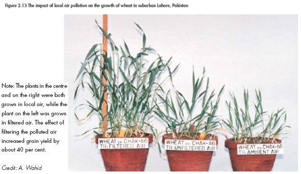 Lowering wheat growth rates with increasing air pollution. Courtesy, UNO