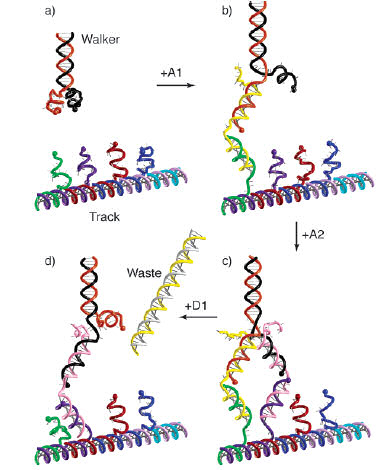 DNA 'walker' moving down another strip of DNA. Image: The Pierce Lab.