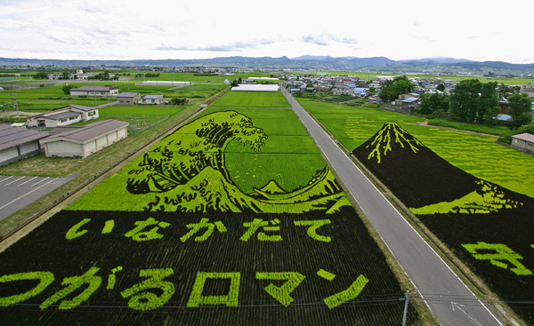 Rice paddy pictures of two of Hokusais 36 Views of Mount Fuji. Image: am.askanet.ne.jp