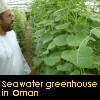 A seawater greenhouse in Oman. Image: seawatergreenhouse.com