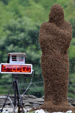 Chinese man covered in 26 kg/57lb of bees.  Source: Reuters