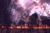 A controlled burn in the interior ofAustralia. Image credit: CU-Boulder