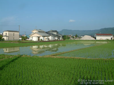View across paddies fields, with Japanese houses behind. Image credit: the auroran sunset