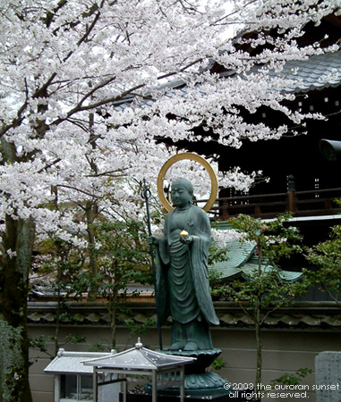 A cherry tree over a Buddhist statue at a Nara temple. Image credit: the auroran sunset