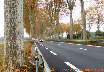 Road with white dashes and plane trees